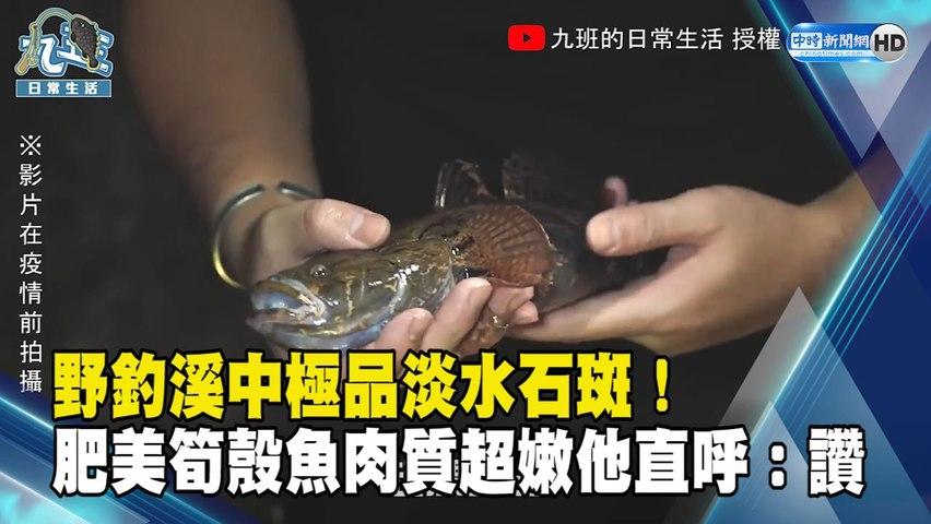 野釣溪中極品淡水石斑!肥美筍殼魚肉質超嫩他直呼:讚