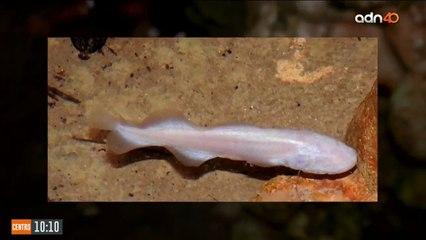 Especies acuáticas desconocidas en el sureste mexicano