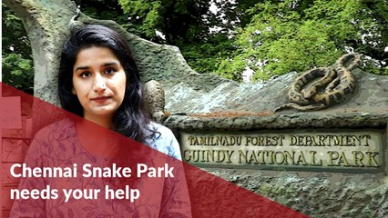Home to baby Gharials and Pythons, Chennai Snake Park needs your help