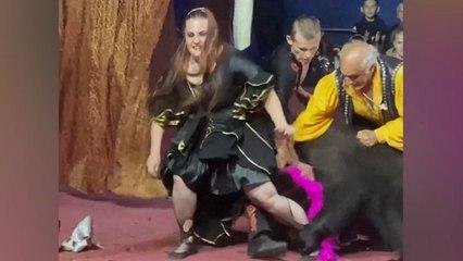 Une dompteuse attaquée par un ours lors d'un cirque