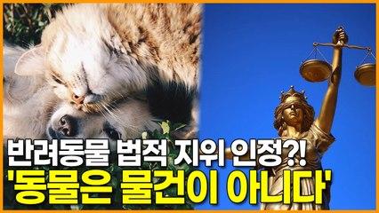 반려동물 법적 지위 인정?! '동물은 물건이 아니다'