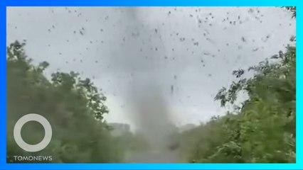 Penampakan 'Tornado' Nyamuk yang Berkeliaran Di Rusia - TomoNews