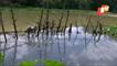 Crocodile Fear Grips Kendrapara Villagers