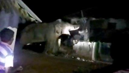 Un éléphant énervé provoque la panique dans un village indien