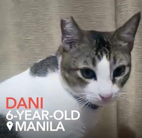 Meet Dani, the fried chicken-loving kitty