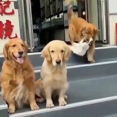 Üç köpeğin kedi ile pozuna büyük ilgi