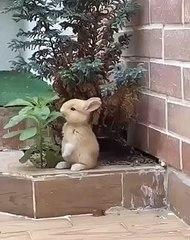 Kibarca beslenen yavru bir tavşan