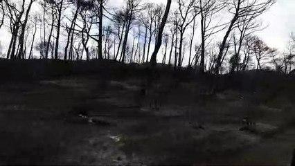 La devastació causada per l'incendi a la zona del castell de Queralt