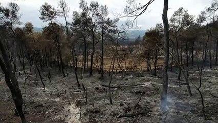Imatges dels boscos cremats i dels camps llaurats que n'han evitat l'avanç