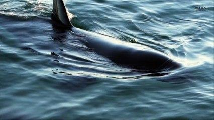 Ballenas (y mucho más) en Península Valdés