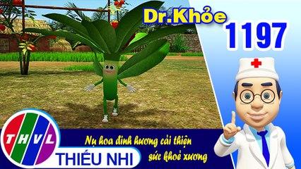 Dr. Khỏe - Tập 1197: Nụ hoa đinh hương cải thiện sức khoẻ xương