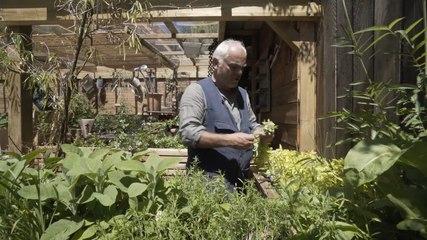 Comment récolter et conserver les herbes aromatiques ?