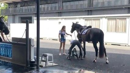JO 2020 : les chevaux olympiques Belges prennent une douche