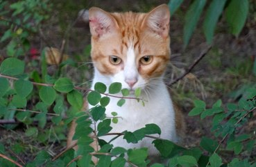 Letting cats take charge can earn their affections