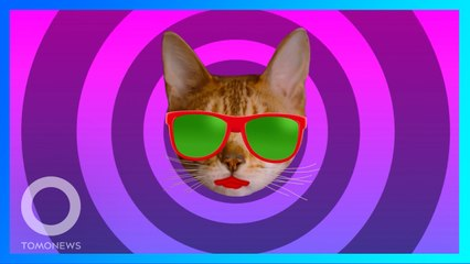 噪音擾鄰報警查看 竟是貓咪在家開趴