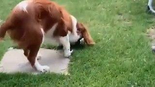 Un petit garçon relache un papillon : son chien le mange