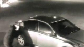 Un ours pénètre dans une voiture