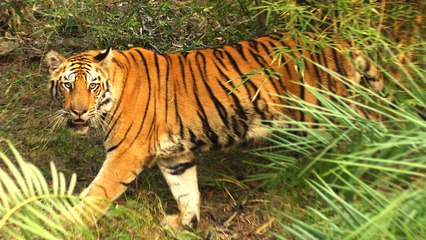 Tiger Day!!