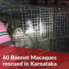Karnataka forest officials rescue 60 monkeys caged for 3 days without food, water
