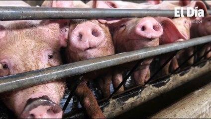Gobierno aumenta a un millón más producción de pollo; carne importada llega al país