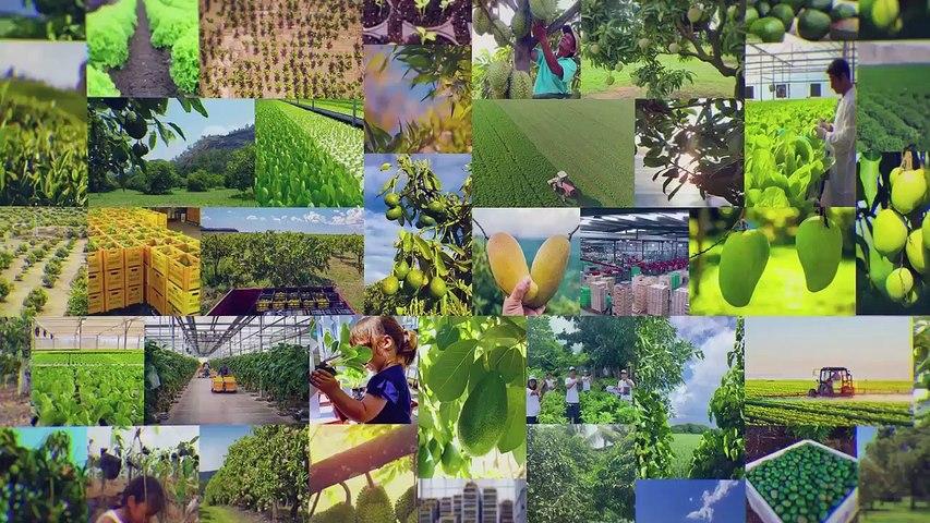 Hass Avocado Development Philippines Aug 21