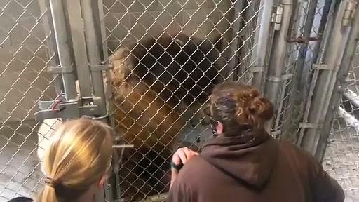 Vacina Covid-19 urso