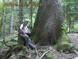 Forêt des Seiglières - Saint -Martin d'uriage 38140