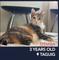 Miss Tania, the cat masseuse!