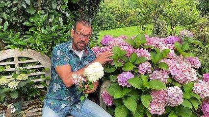Das Jahr der Hortensien