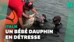 En Italie, des garde-côtes sauvent un bébé dauphin pris au piège dans un filet