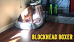 'Naughty Boxer Gets his Head Stuck in a Toy Log'