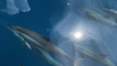 'Tahiti Dolphin Experience | Pod of Dolphins Swim Alongside Yacht'