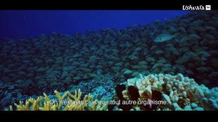 Au-delà des récifs coralliens polynésiens, la vie,avec Lambert Wilson - EXTRAIT
