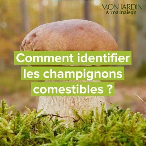 Comment identifier les champignons comestibles ?