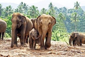 Los Big Five de Sri Lanka y dónde verlos