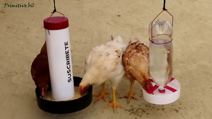 Como hacer comedero y bebedero para gallinas y pollos de PVC