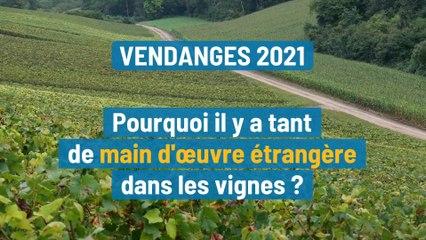 Pourquoi y a-t-il tant de main-d'œuvre étrangère dans les vignes pour les vendanges ?