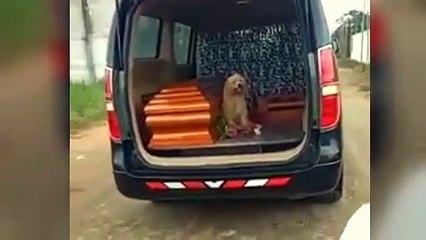 Perrito se niega a dejar a su dueña fallecida de 95 años y se sube al el coche fúnebre