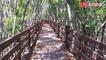 新豐紅樹林「龍貓隧道」封閉26月整修 本週末卻只能局部開放