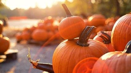 10 Pumpkin Farms Near You