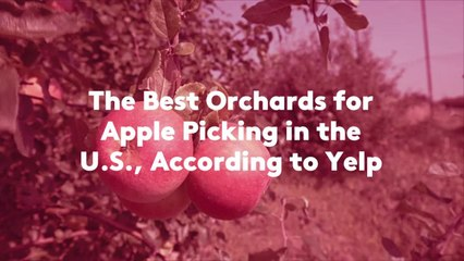 The Best Orchards for Apple Picking in the U.S., According to Yelp