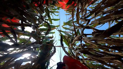 Skydiving Right Into A Cornfield