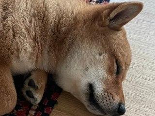 Warum dieses Hundebild eine ganze Kryptowährung explodieren ließ