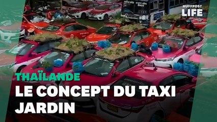 À Bangkok, ces taxis ont été transformés en jardins et en potagers