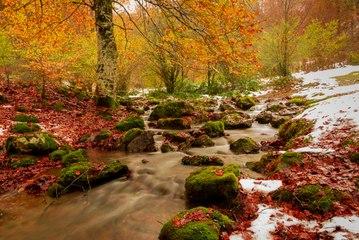 Europa en 5 bosques otoñales