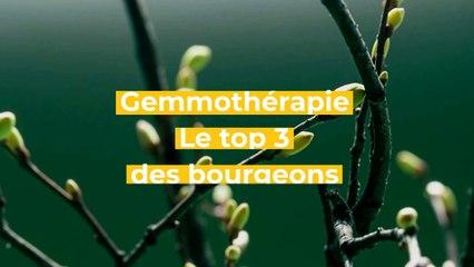 Gemmothérapie : le top 3 des bourgeons