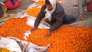 How sacred flowers are turned into incense sticks