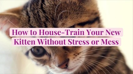How to House-Train Your New Kitten Without Stress or Mess