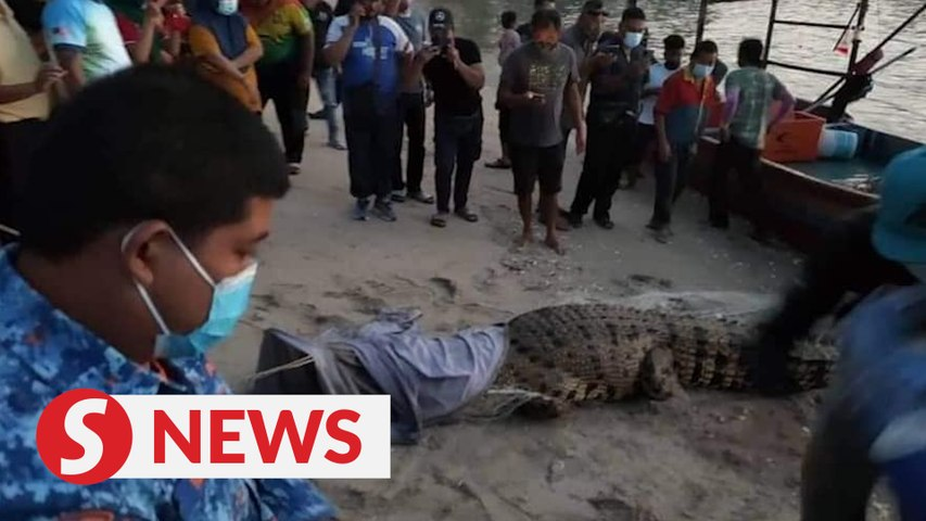 Crocodile believed to 'travel interstate' gets caught in a fishnet