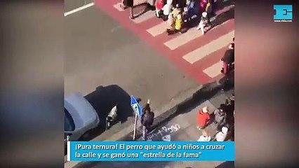 """¡Pura ternura! El perro que ayudó a niños a cruzar la calle y se ganó una """"estrella de la fama"""""""
